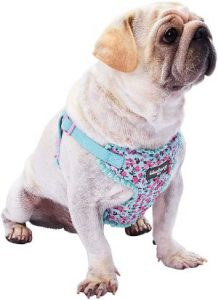 Blueberry Pet 10+ Patterns Made Well Floral Collection Dog Collars, Harnesses, Leashes, Harness Dr