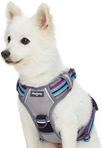 Blueberry Pet 15 Colors Safe & Comfy 3m Reflective Multi Colored Stripe Collection Collars, Harnes