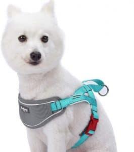Blueberry Pet 8 Colors Soft & Comfortable 3m Reflective Strips Nylon Neoprene Padded Training Dog H