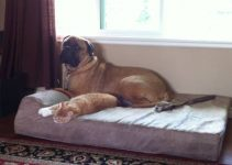 5 Best Dog Beds for Bullmastiffs (Reviews Updated 2021)