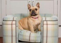 Dog Bed For French Bulldogs