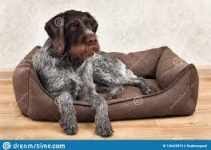 Dog Bed For German Shorthaired Pointers