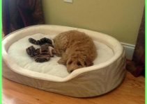 Dog Bed For Labradoodles