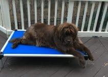5 Best Dog Beds for Newfoundlands (Reviews Updated 2021)