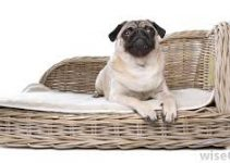 Dog Bed For Puggles