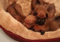 5 Best Dog Beds for Rhodesian Ridgebacks (Reviews Updated 2021)