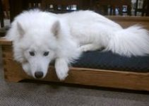 5 Best Dog Beds for Samoyeds (Reviews Updated 2021)