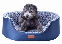 5 Best Dog Beds for Schnoodles (Reviews Updated 2021)