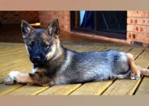 Dog Bed For Swedish Vallhunds
