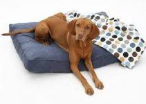 5 Best Dog Beds for Vizslas (Reviews Updated 2021)
