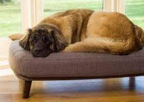 Dog Beds For Leonbergers