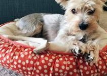 Dog Beds For Yorkipoos