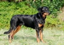 Dog Crates for Beaucerons