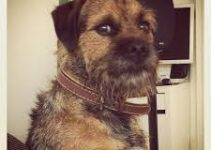 5 Best Dog Brushes for Border Terriers (Reviews Updated 2021)