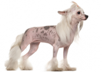 Dog Brush For Chinese Crested Dogs