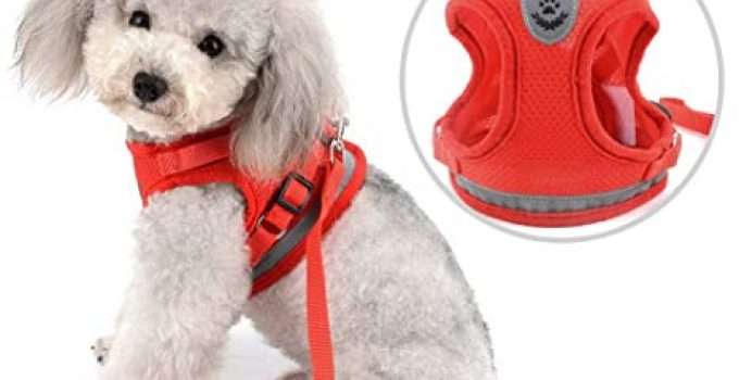 Dog Collar For Labradoodles