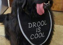 Dog Collar For Newfoundlands