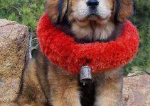 5 Best Dog Collars for Tibetan Mastiffs (Reviews Updated 2021)