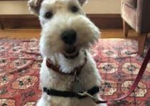5 Best Dog Collars for Wire Fox Terriers (Reviews Updated 2021)