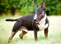 5 Best Dog Crates for Bull Terriers (Reviews Updated 2021)