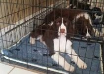 5 Best Dog Crates for English Springer Spaniels (Reviews Updated 2021)