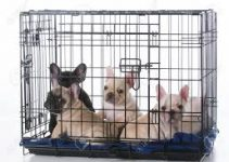 5 Best Dog Crates for French Bulldogs (Reviews Updated 2021)