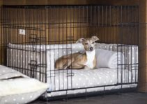 Dog Crate For Italian Greyhounds