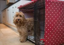 Dog Crate For Labradoodles