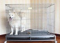 Dog Crate For Samoyed
