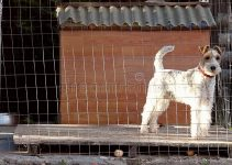 Dog Crate For Wire Fox Terrier