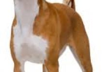 5 Best Dog Foods for Basenjis (Reviews Updated 2021)