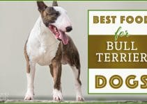 5 Best Dog Foods for Bull Terriers (Reviews Updated 2021)