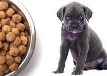 5 Best Dog Foods for Cane Corsos (Reviews Updated 2021)