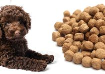 Dog Food For Labradoodles
