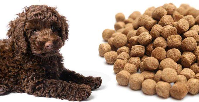 Dog Food For Labradoodles