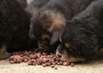 Dog Food For Tibetan Mastiffs