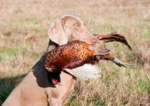 5 Best Dog Foods with Pheasant (Reviews Updated 2021)