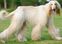 Dog Harness For Afghan Hound Dogs