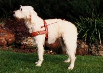 Dog Harness For Labradoodles
