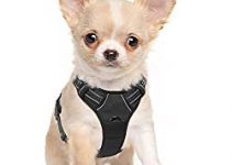 Dog Harness For Wire Fox Terrier