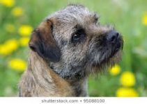 Dog Muzzle For Border Terriers