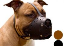 Dog Muzzle For Bull Terriers (reviews Updated 2020)