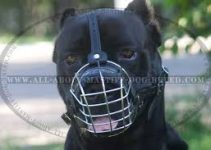 5 Best Dog Muzzles for Cane Corsos (Reviews Updated 2021)