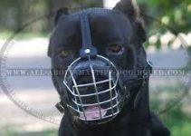 Dog Muzzle For Cane Corso