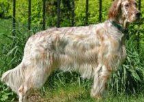Dog Muzzle For English Setters