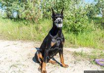 5 BestDog Muzzles for German Pinschers (Reviews Updated 2021)