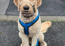 Dog Muzzle For Labradoodles