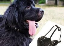 5 Best Dog Muzzles for Newfoundlands (Reviews Updated 2021)