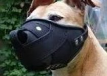 Dog Muzzle For Staffordshire Bull Terriers