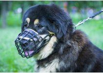 5 Best Dog Muzzles for Tibetan Mastiffs (Reviews Updated 2021)